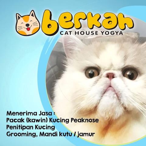 Berkah-cat-house-jogja