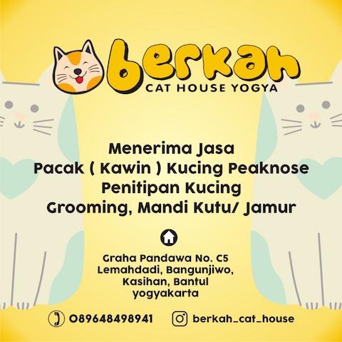 Berkah-cat-house
