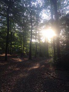 Main di hutan Langerfelder Wald