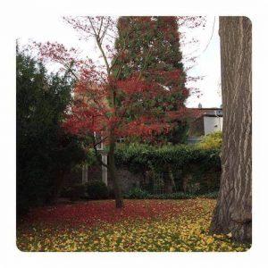 kegiatan musim gugur di jerman