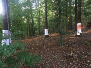 Pohon berbalut kain di Langerfelder Wald