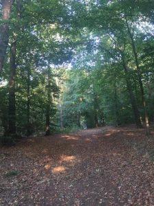 Berkelana di Langerfelder Wald