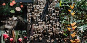 Flora dan Jamur HL Leuser