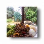 menu sehat tanos clean eating challenge